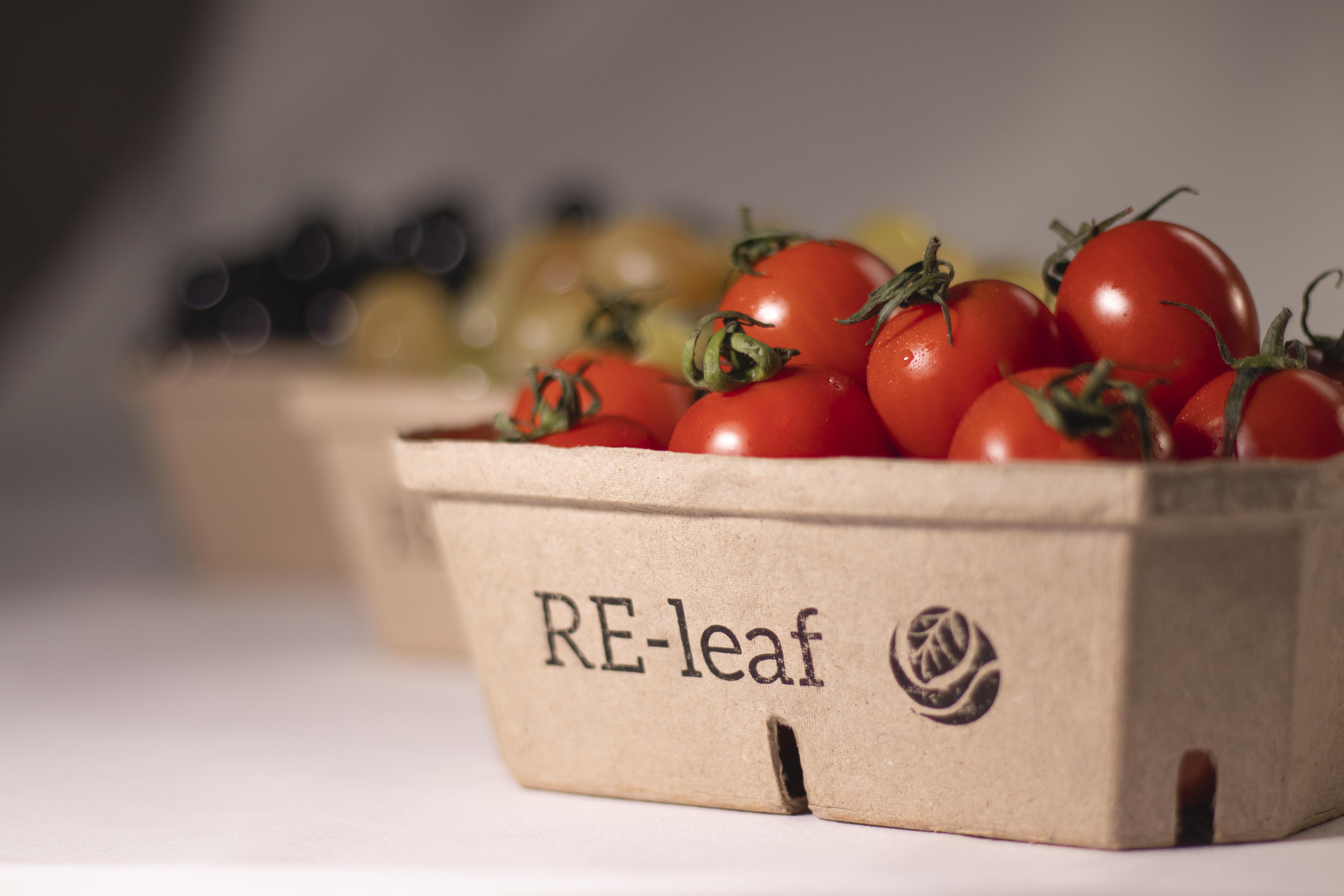 RE-leaf cast boxes (500 g)