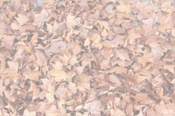 General view of autumn fallen leaves.