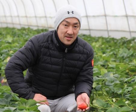 イチゴ 褐変防止へ細心の水管理