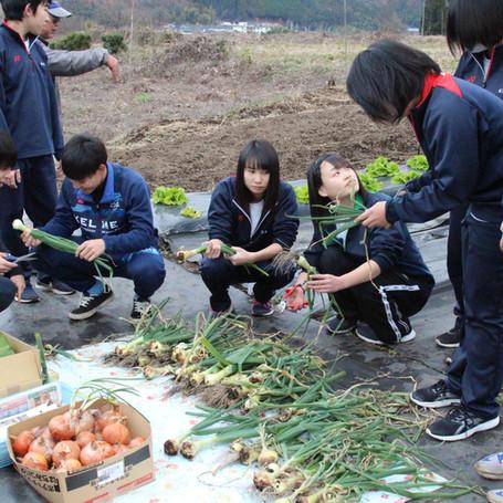 農業の持つ可能性実感 タマネギのセット栽培
