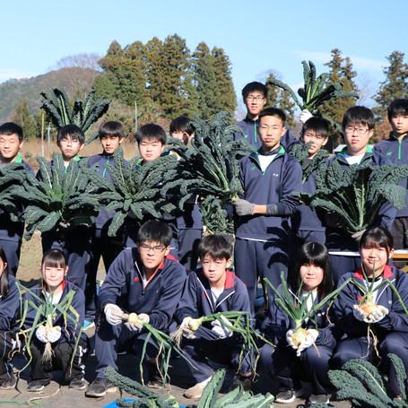 馬頭高校で新タマネギと黒キャベツの収穫
