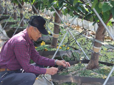 ナシの盛土式根圏制御栽培法
