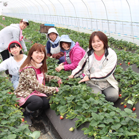 女性の力で「あおき苺農園」