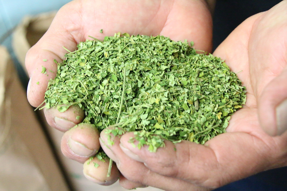 葉は独自技法を使い6時間乾燥させ、粉末にします