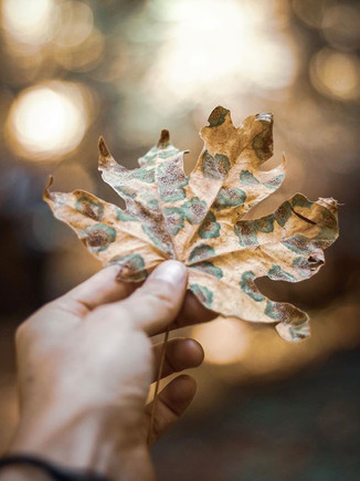 Autumn is here!! My favorite time of yea