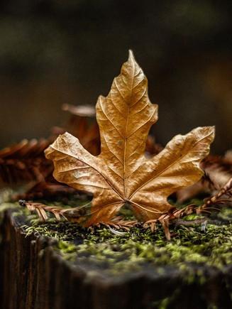 Fall aesthetics 🍁🤘🏼 #fall #leaves #fa