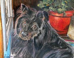 First Dog Portrait