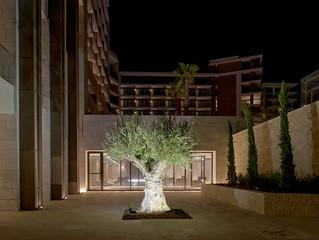 Древние оливковые деревья и руины города Аматус на территории отеля Amara, Кипр