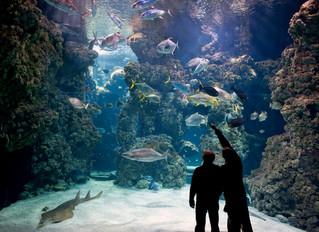 Проведите ночь в музее с отелем Metropole Monte-Carlo, Монако