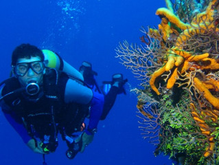 В подводные пещеры в сентябре вместе с Out of the Blue, Capsis Resort, Крит