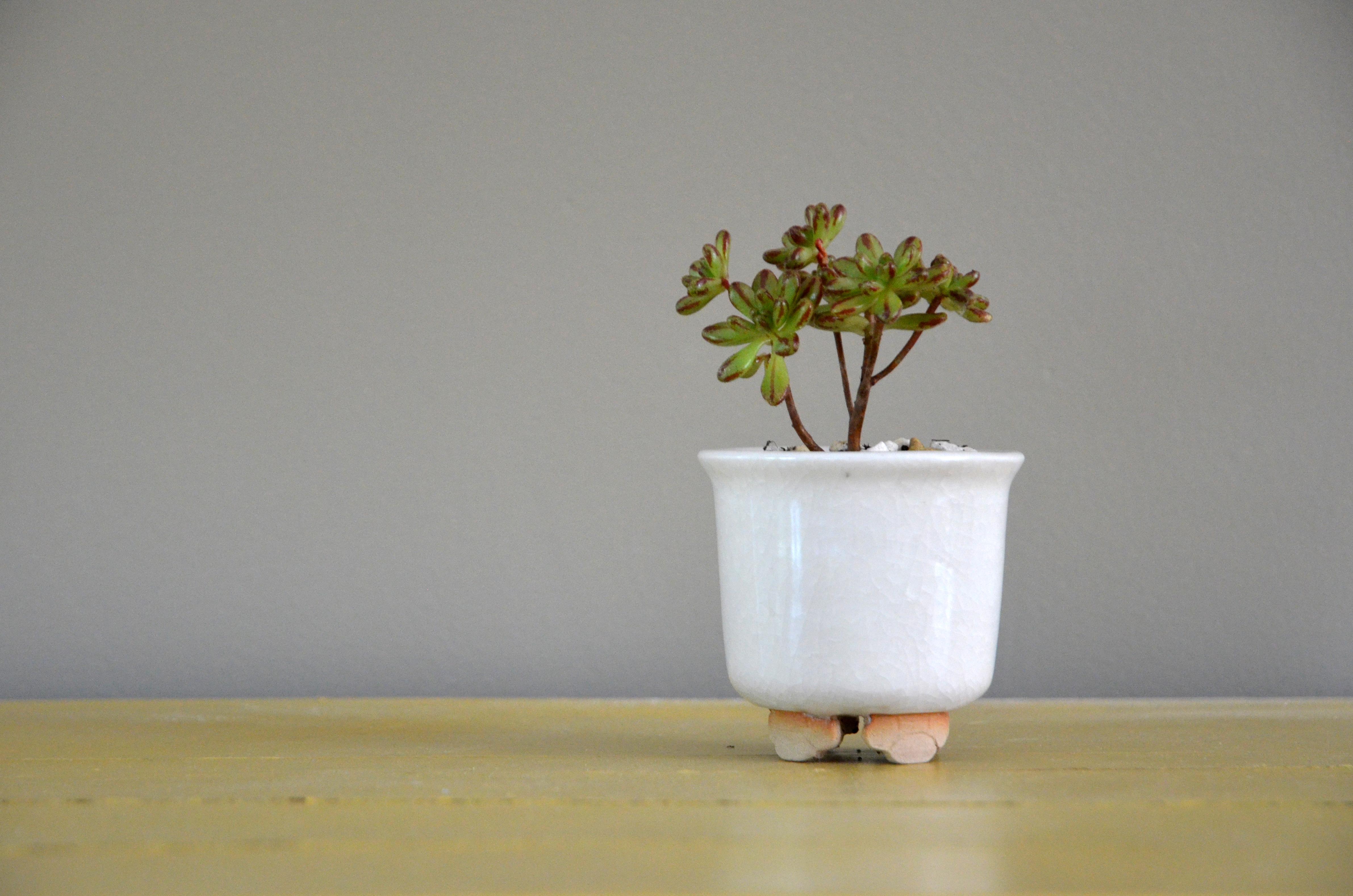 mini_bonsai_pot_marine_briand_ceramics_6