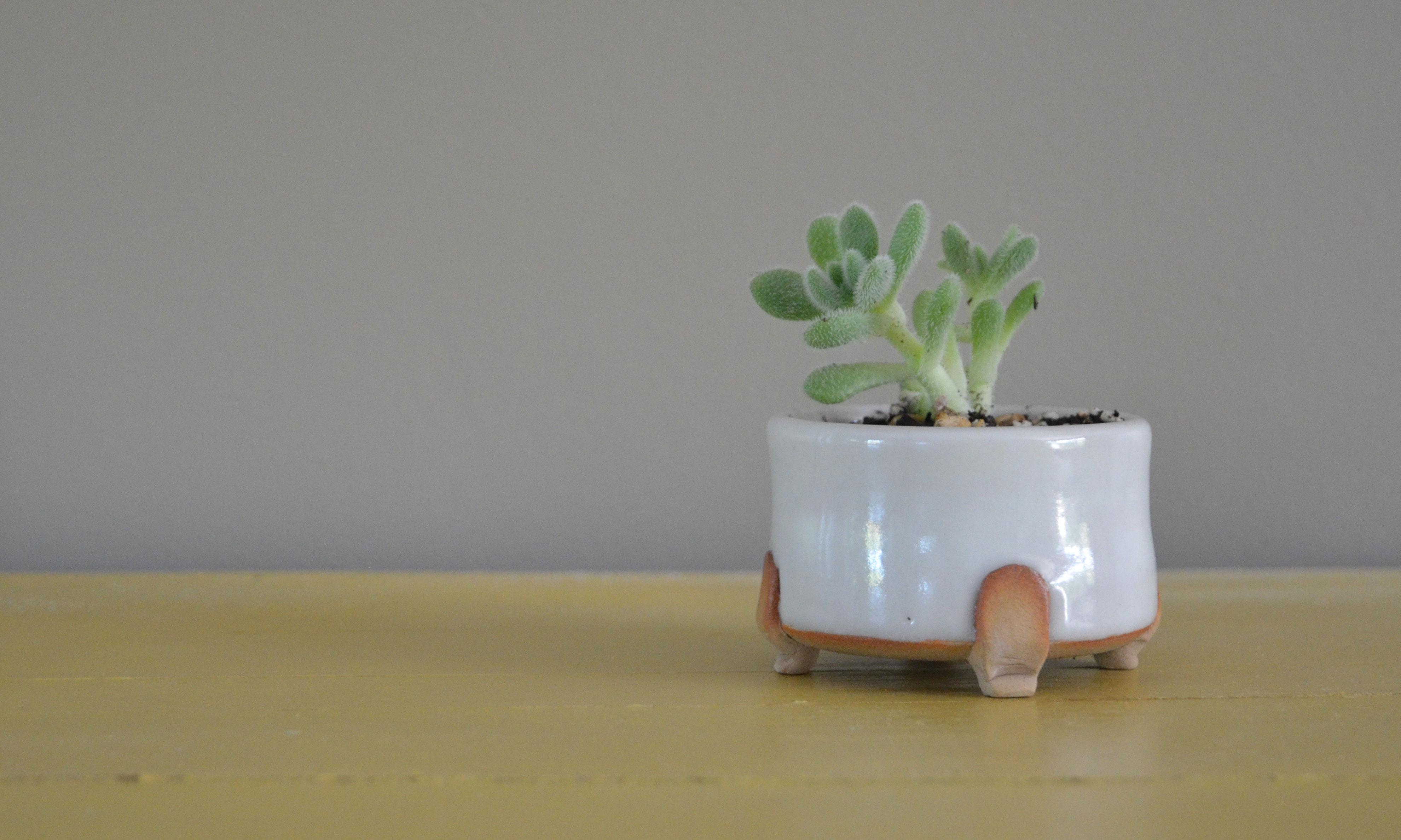 mini_bonsai_pomarine_briand_ceramics_8