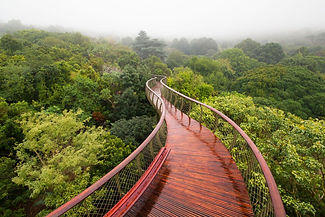 Foto: Adam Harrower - Kirstenbosch centenary tree canopy walk Cape Town