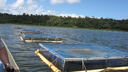 FISH FARMING CONSULTING, FISH TURNKEY PROJECTS Tilapia ...