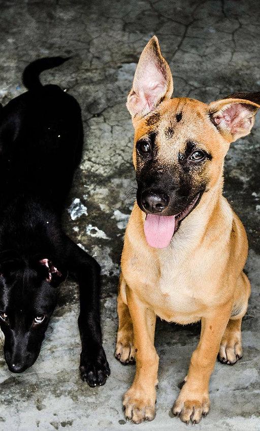 Animal Charity | Ahangama | Animal SOS Sri Lanka