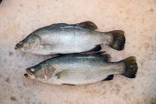 Sea Bass (Barramundi) - Whole