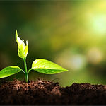 Growth of new life on  background.jpg