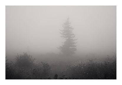 DS Fog-6149 Web copy.jpg