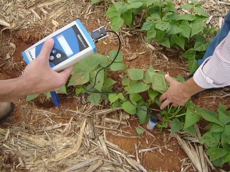 Novas tecnologias auxiliam produtor a otimizar custos e melhorar renda