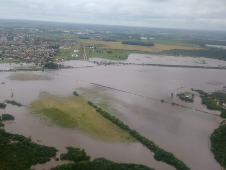 Gaúchos deverão colher área muito inferior à um milhão de hectares no arroz