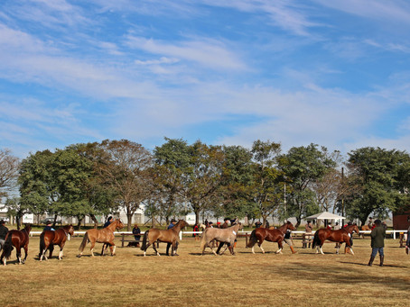 Ciclo de Exposições Passaporte do Cavalo Crioulo chega à Alegrete