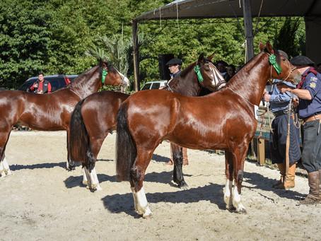 Ciclo de Passaportes do Cavalo Crioulo faz parada em Igrejinha