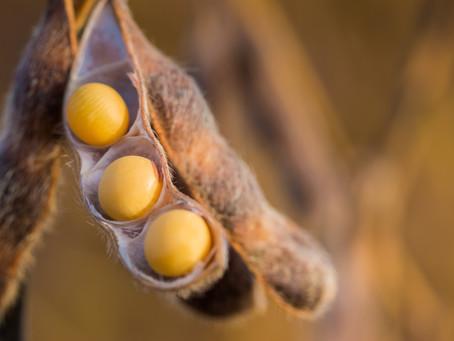SLC Agrícola investe na produção de sementes no Matopiba e Mato Grosso