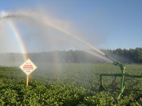 Seguro rural alia-se à irrigação na proteção de lavouras gaúchas