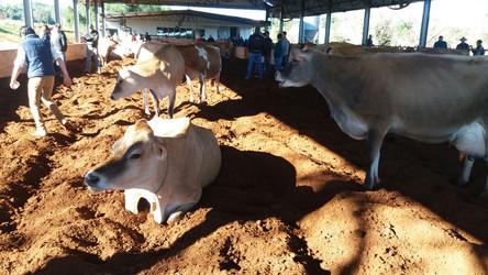 Produtores participam da tarde de campo sobre Compost Barn