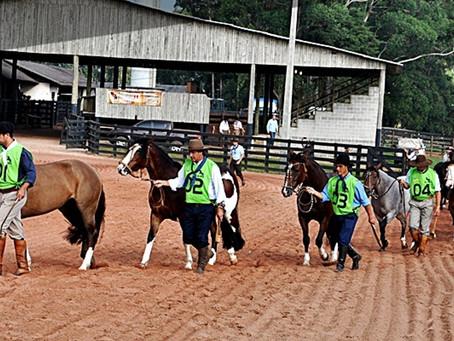 Ponta Grossa será palco de eventos do cavalo Crioulo