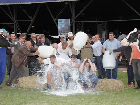 Vacas de Carlos Barbosa e de Eldorado do Sul vencem concurso leiteiro da Expoleite