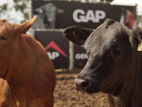 GAP Genética aposta em mercado aquecido e coloca em pista campeões