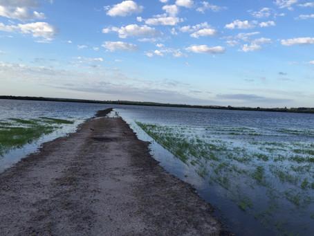 Clima causa preocupação para produtores de arroz do Sul