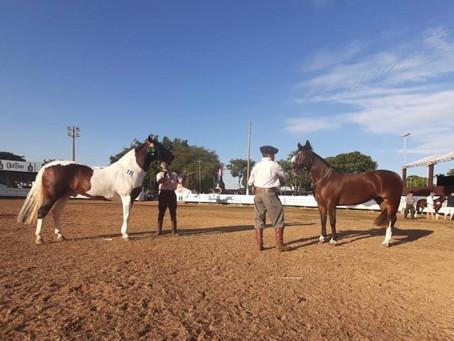 Núcleo de Goiânia do Cavalo Crioulo inaugura sua sede