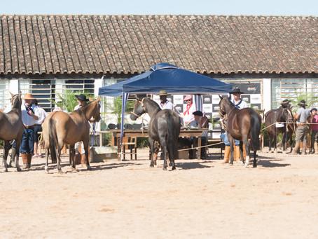 Camaquã recebe etapa do ciclo de Passaportes do Cavalo Crioulo