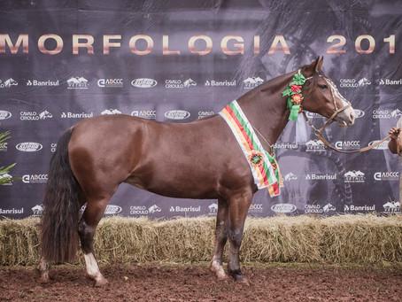 Cruz Alta seleciona mais oito animais em Passaporte para a Expointer
