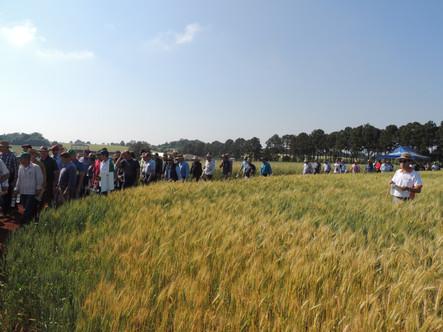 Dia de Campo Trigo reuniu mais de 500 produtores