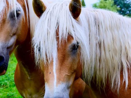 Simvet/RS questiona Normativa do Estado sobre trânsito de equinos