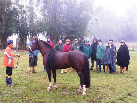 Cegafe realiza curso de morfologia do cavalo Crioulo
