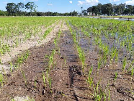 Irrigantes conquistam vitória contra cobrança indevida de energia