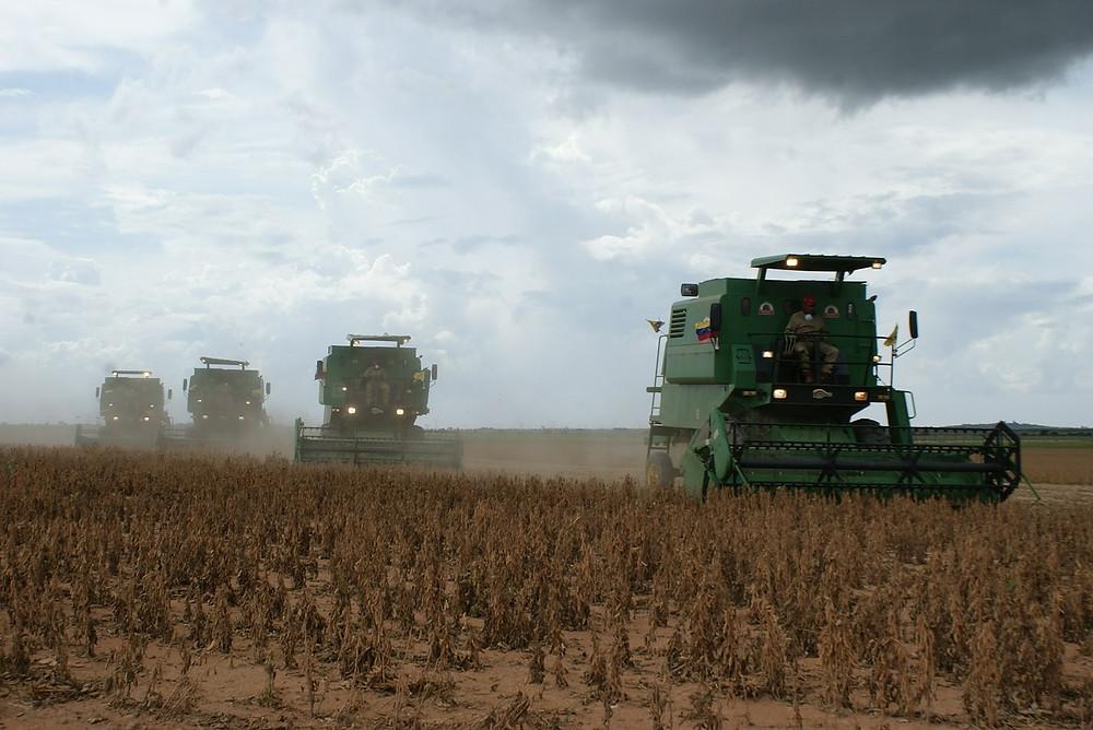 harvest-519209_1280.jpg
