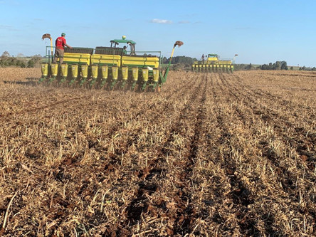 Custos da soja e do milho apresentam variação no início da safra