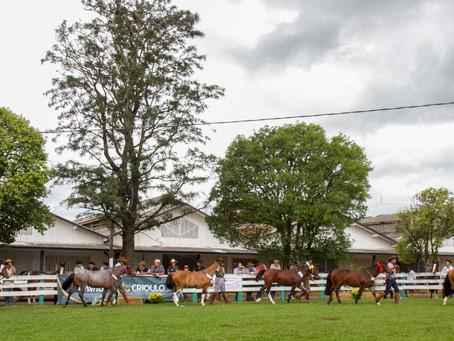 Município paranaense realiza sua primeira Exposição Passaporte da raça Crioula