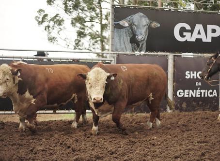 Associados da Conexão Delta G se destacam entre os maiores vendedores de touros