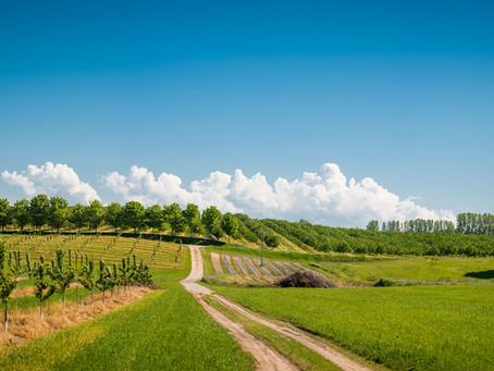 Produtor rural deve estar atento à legalidade das multas ambientais