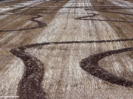 Manejo de solo no inverno influencia no resultado da soja em áreas de arroz