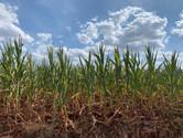Entidades indicam ações para amenizar efeitos da estiagem no Rio Grande do Sul