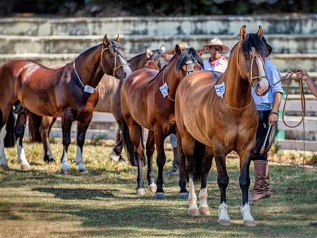 Capital Federal é a penúltima parada do ciclo de Passaportes do Cavalo Crioulo