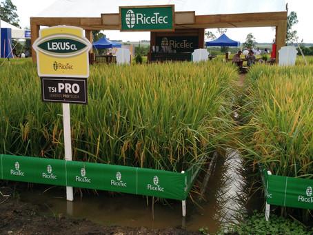 RiceTec lança novo produto oficialmente na Abertura da Colheita do Arroz