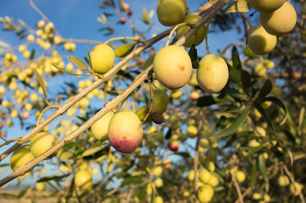 olives-503792_1280.jpg